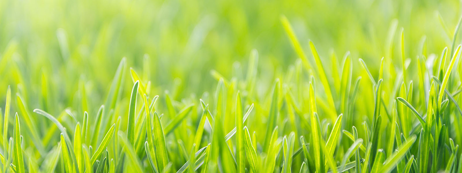 Natural lawn care | Canadian Property Stars